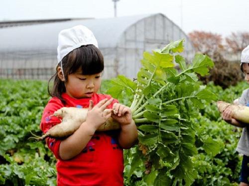 Ngỡ ngàng về cách giáo dục mầm non ở Nhật Bản